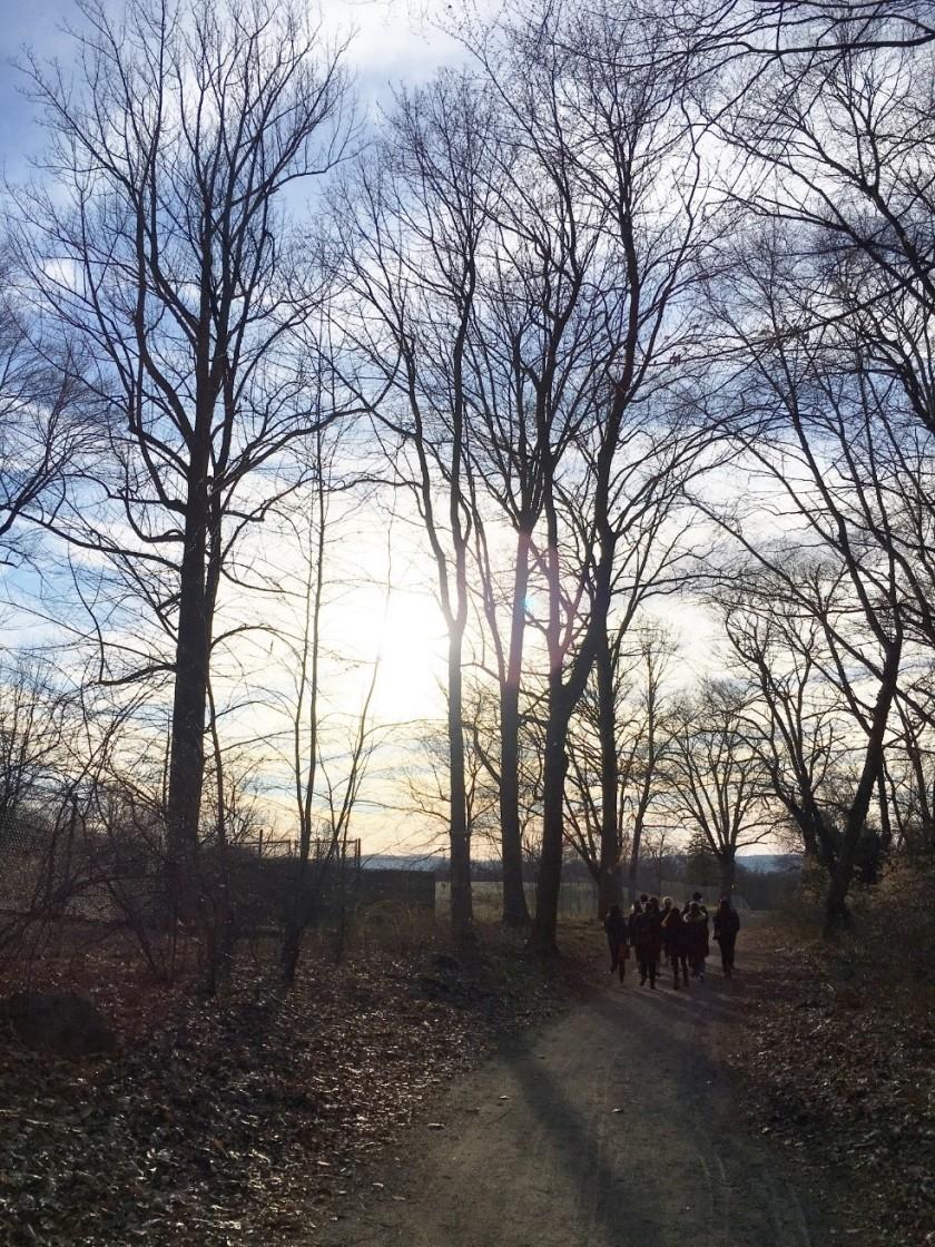 3. Walking in the forest....jpg